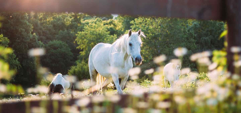 Comment adapter l'alimentation de son cheval en période d'activité ralentie ?