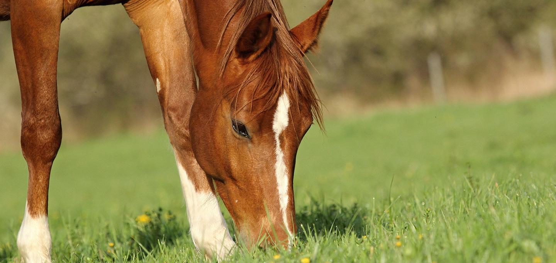 Les minéraux dans l'alimentation du cheval