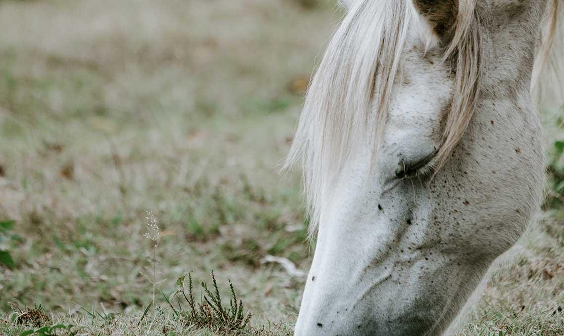 Quel aliment Reverdy pour mon cheval âgé?