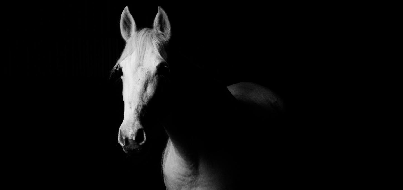 L'alimentation du cheval : mythes, réalités et contres-vérités