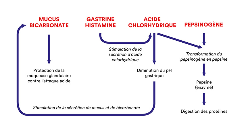 pH du contenu gastrique