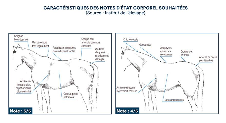 Caractéristiques des notes d'état corporel souhaitées (Source : institut de l'élevage)