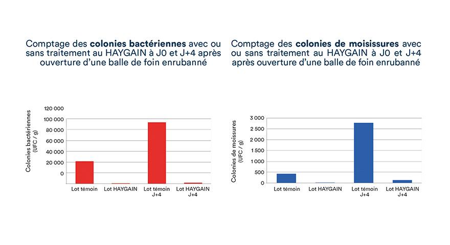 Comptage des colonies bactériennes et de moisissures avec ou sans traitement au HAYGAIN à J0 et J+4