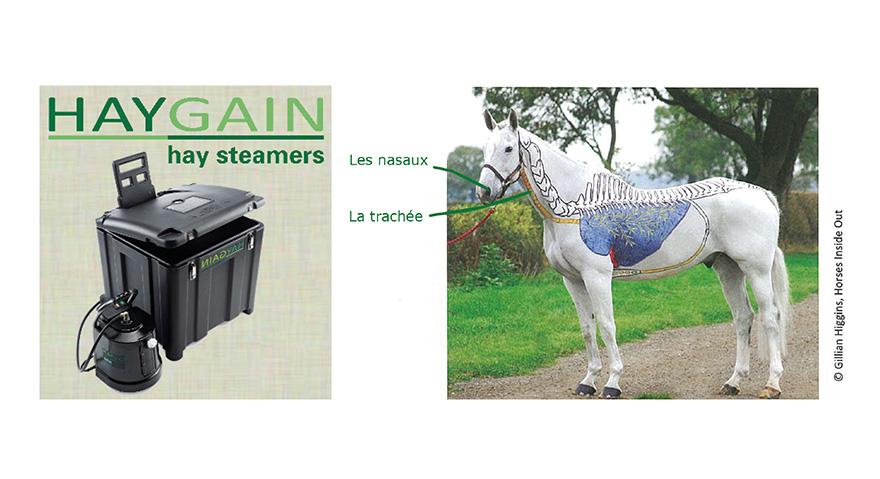 Haygain, hay steamers