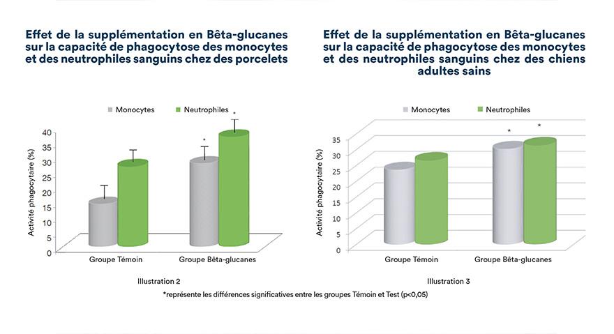 Effet de la supplémentation en bêta-glucanes sur la capacité de phagocytose des monocytes et des neutrophiles sanguins