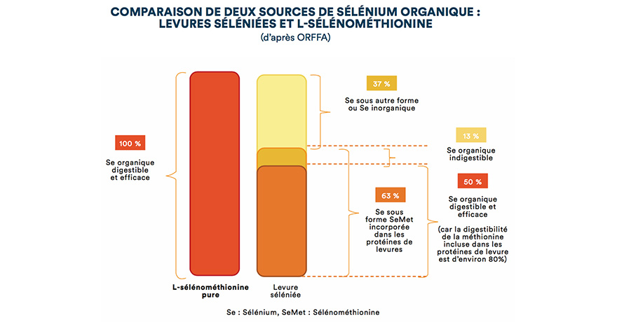 Comparaison de deux sources de sélénium organique : levures séléniées et L-sélénométhionine