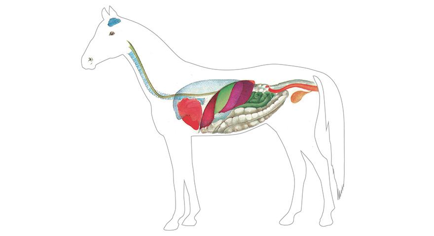 Physiologie digestive