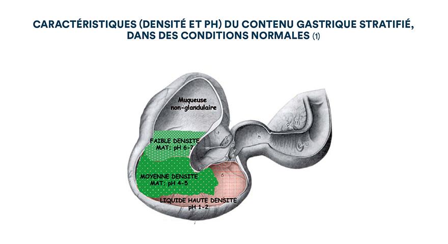 Caractéristiques (densité et pH) du contenu gastrique stratifié dans des conditions normales