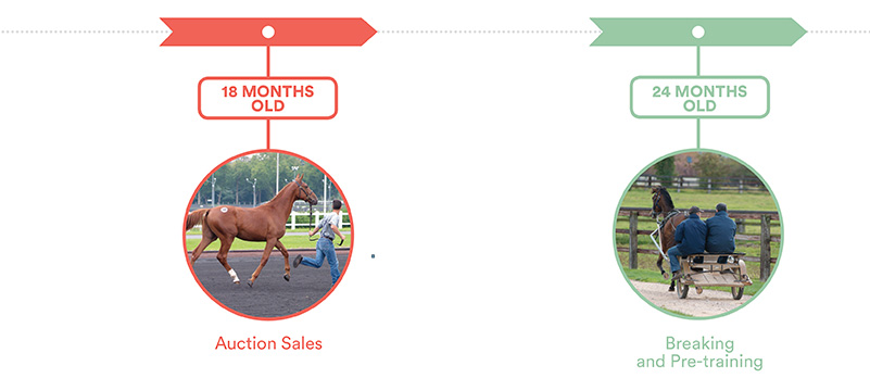 Key periods of growth and development in the foal, 18 and 24 months