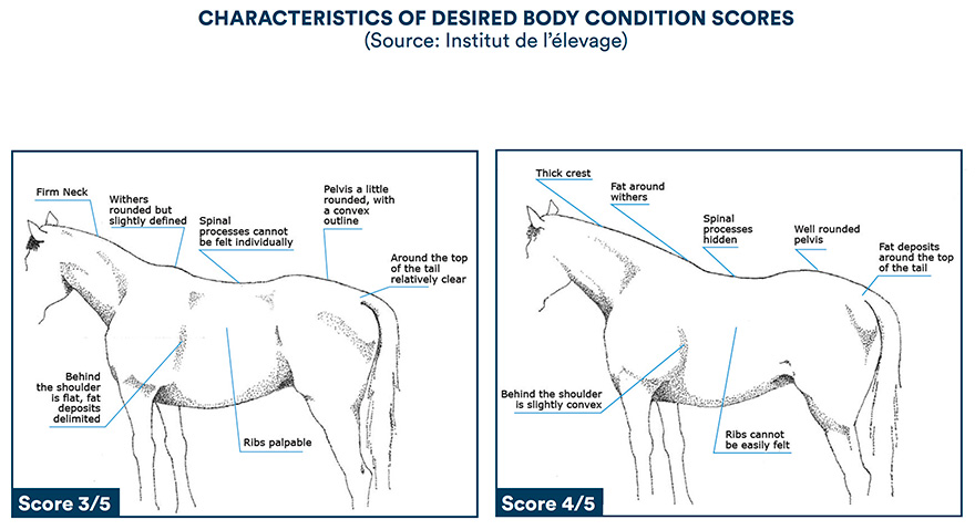 Characteristics of desired body condition scores