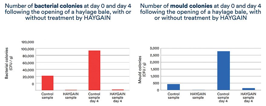 Number of bacterial colonies and mould colonies with or without treatment by HAYGAIN at day 0 and day 4