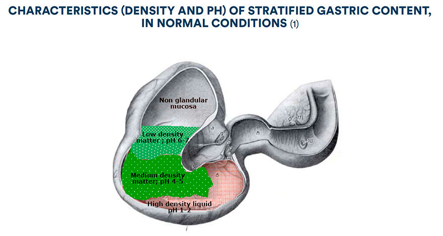 Characteristics (density and pH) of stratified gastric content, in normal conditions