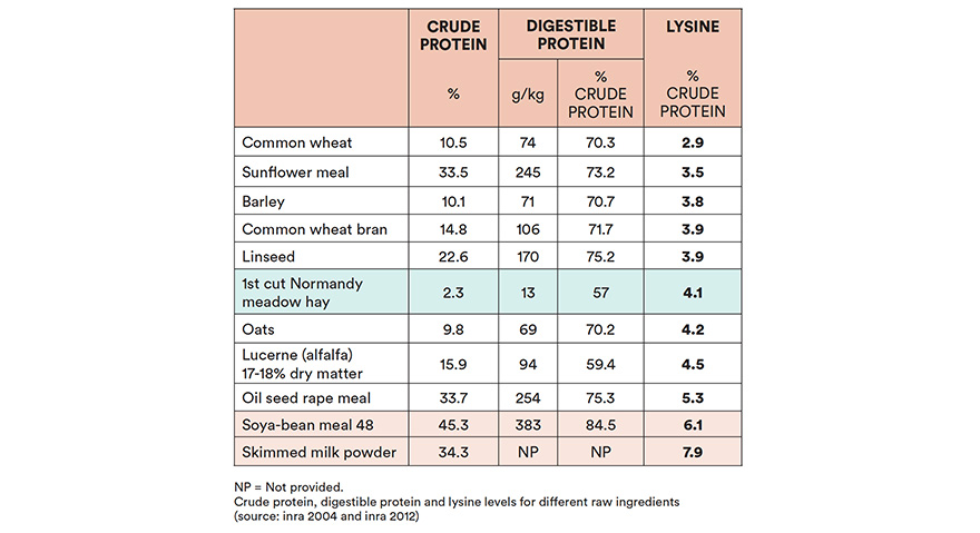 Which protein sources to choose