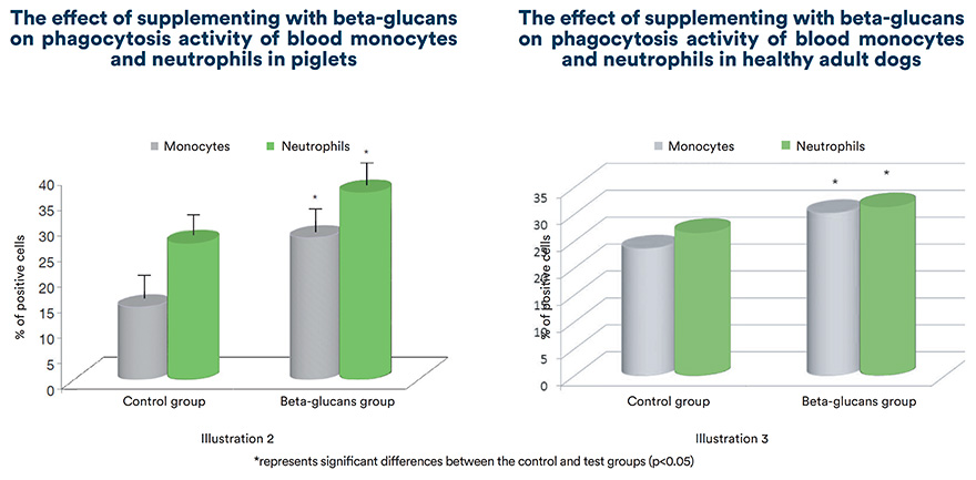 The effect of supplementing with beta-glucans on phagocytosis activity of blood monocytes and neutrophils in piglets and adult dogs