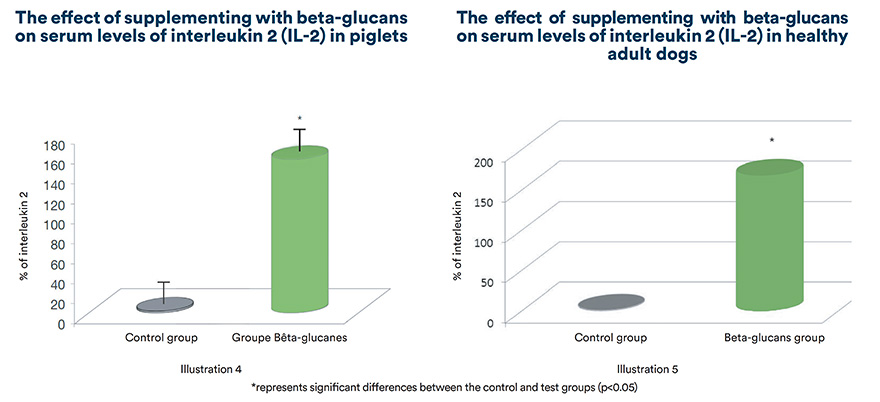 The effect of supplementing with beta-glucans on serum levels of interleukin 2 (IL-2) in piglets and adult dogs