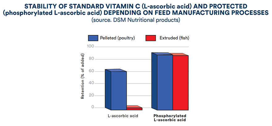 Stability of standard vitamin C (L-ascorbic acid) and protected (phosporylated L-ascorbic acid) depending on feed manufacturing processes