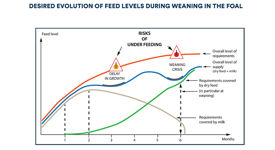 Desired evolution of feed levels during weaning in the foal
