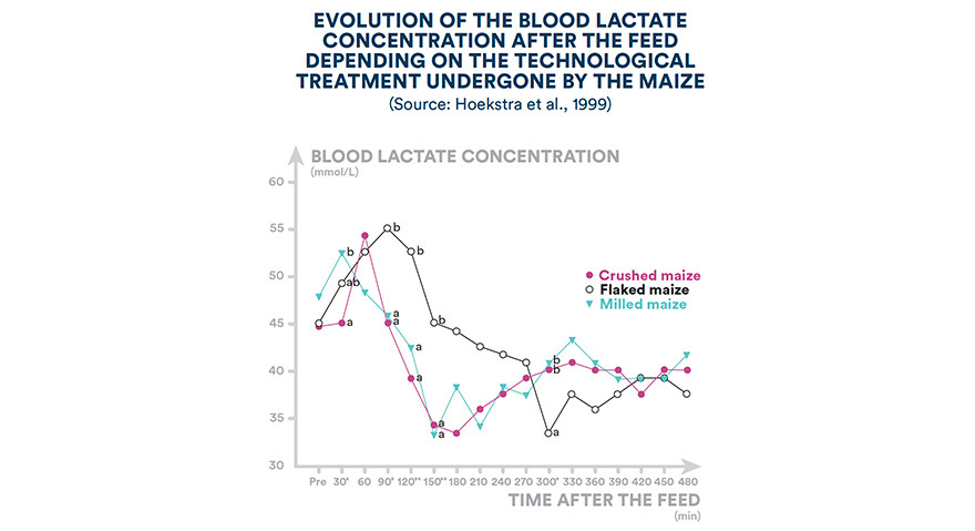 Evolution of the blood lactate concentration after the feed depending on the technological treatment undergone by the maize